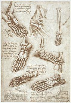 Anatomy Studies: The Bones of the Foot & Anatomy of the Shoulders by Leonardo da Vinci