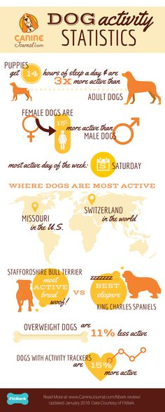 Dog Activity Statistics: Did you know dogs with activity trackers are 15% more active?