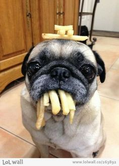 French fries keep him calm