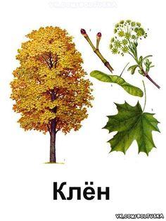 Planting For Kids, Dandelion, Trees, Babies, Math, Flowers, Plants, School, Naturaleza