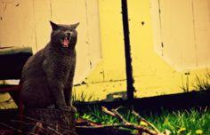 Brutis is too fierce. >:o