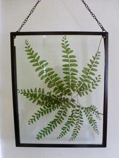 Real Pressed Fern Botanical Art Herbarium of by GardenGalleries