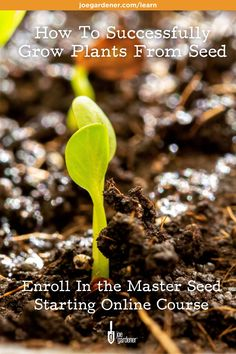Starting your own seedlings is such a great way to get your hands into the soil while you're waiting for the weather to cooperate - and it's a terrific way to save you money in the garden. | Master Seed Starting is a comprehensive online course to help gardeners through the struggles common seed starting struggles. | #masterseedstarting #seedstarting #startyourownseeds #indoorgardening #wintergardening #startseedsindoors #howtostartseeds Starting Plants From Seeds, Starting Seeds Indoors, Seed Starting, Gardening Courses, Organic Gardening Tips, Organic Seeds, Grow Your Own Food, Green Life, Planting Seeds