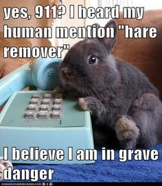 Every bunny for him/herself.