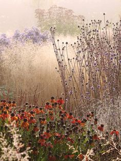 Perennials in a prairie-planting style - All For Garden