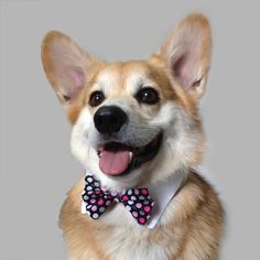Does your pup sport a bow tie? Let us see your stylish pooch on National Bow Tie Day!