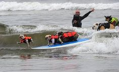 Surf City Surf Dog: A dog jumps off as five dogs ride on the same surfboard