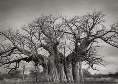 Ancient Trees: Beth Moon's 14-Year Quest to Photograph the World's Most Majestic Trees | Colossal