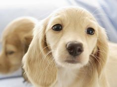 dulce perrito