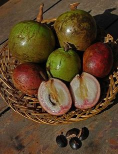 Star Apple Exotic Fruit, Tropical Fruits, Fruit Plants, Fruit Trees, Fruit And Veg, Fruits And Vegetables, Apple Fruit, Star Apple, Bow Braid