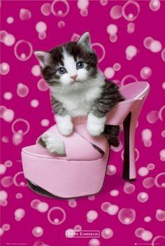 fashion kitten