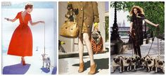 Pugs and Fashion