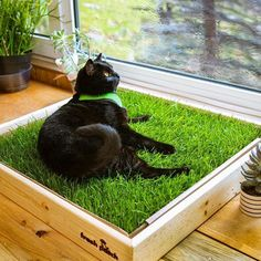 Save on a Fresh Patch Custom Wooden Sleeve when bundled with a pet grass pad. The Kitten Pet Grass Pad Pack includes a Protective Wooden Sleeve and Fresh Patch Grass Box Pet Grass, Grass For Cats, Cat Enclosure, Reptile Enclosure, Diy Cat Tree, Cat Hacks, Cat Garden, Cat Room, Pet Furniture