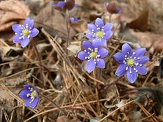 Have you seen any early spring buds popping up around you? You can learn more about plant life in this season in a class/hike on Saturday, March 16. Student writer Emma Loewe interviews the instructor on our blog.
