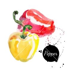 Illustration of Red and yellow peppers Hand drawn watercolor painting on white background Vector illustration vector art, clipart and stock vectors. Watercolor Fruit, Watercolor Cards, Watercolor Paintings, Watercolour, Stuffed Peppers With Rice, Fruit Art, Fruit And Veg, Food Illustrations, Botanical Illustration