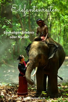 Das Thema Elefantenreiten sorgt immer für Diskussionen. Abenteuer oder No-Go? Hier lest ihr die Meinung einer Asien-Expertin.