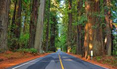 The Avenue of the Giants is America's most peaceful drive - Posted on Roadtrippers.com!