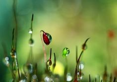 moss macro abstract green nature red detail botanical sharon johnstone