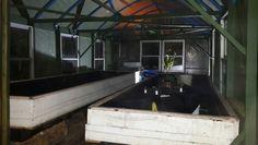Small greenhouse aquaponic setup