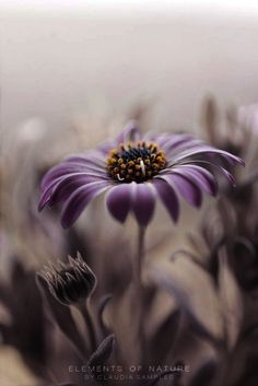 Dark brown and purple