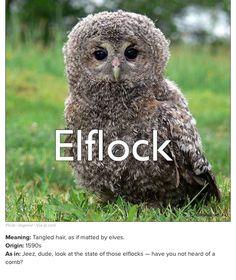 New old word : elflock