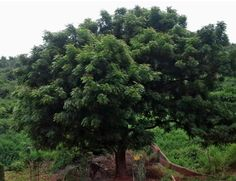 The Interesting and Natural Insecticide Called Neem Verticle Garden, Natural Insecticide, Water Tables, Square Foot Gardening, Neem Oil, Love Garden, Raised Garden Beds, Fruits And Vegetables, Organic Recipes