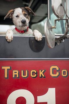 We've got a furry new friend joining Firehouse 51 TONIGHT!