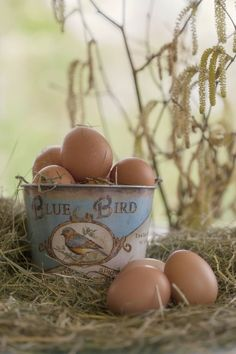 Country Life ~ Farm eggs