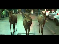 Awesome Tooheys Deer Ad.mp4 - YouTube