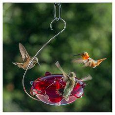 Bird feeders and squirrel feeders bring wildlife to your yard. Find hummingbird feeders, squirrel-proof feeders, oriole feeders and squirrels corn feeders. Hummingbird Food, Hummingbird House, Humming Bird Feeders, Humming Bird Bath, Humming Birds, Glass Garden Art, How To Attract Hummingbirds, Bird Houses, Nature