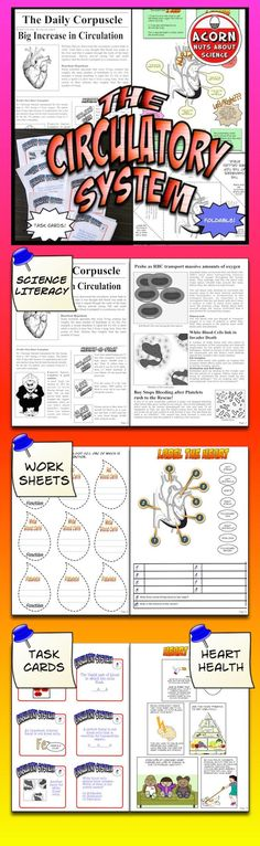 This Circulatory System unit is packed with activities diagrams foldables worksheets circulatory system task cards and more on the circulatory system. 7th Grade Science, Science Curriculum, Science Resources, Middle School Science, Science Classroom, Science Lessons, Life Science, Health And Physical Education, Education Humor