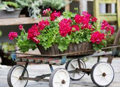 PR Agency For Flowers, Flower Bulbs & Pot Plants Markets in Poland | PiART is a dedicated PR Agency in Poland to Cut Flowers, Pot Plants, Flower Bulbs Markets. Also For Related Markets Such As Foam And Floral Accessories, Floral Conditioners, Ribbon And Pack Papers.