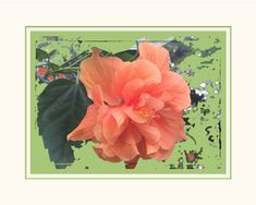 Floral Wall Art. Coral Double Hibiscus.  Matted 8 x 10 size. Ready to Frame. For Your Wall Grouping. Saturated Colors. Original Design. by VintageArtForLiving on Etsy https://www.etsy.com/listing/488299915/floral-wall-art-coral-double-hibiscus