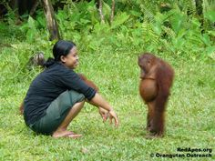 The Standoff © Orangutan Outreach