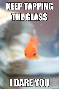 glass funny pictures