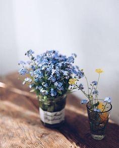 New Flowers Blue Purple Mason Jars Ideas Spring Aesthetic, Flower Aesthetic, Des Fleurs Pour Algernon, Wild Flowers, Beautiful Flowers, Growing Plants, Planting Flowers, Floral Arrangements, Greenery