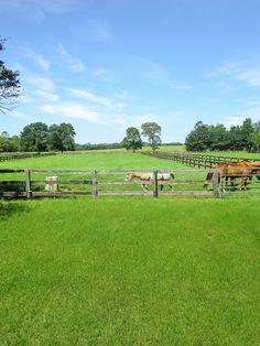 Always A Breeze Farm! 9 Acre Farm In Dunnellon, Fl.