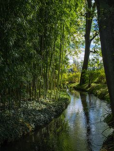 Monet's garden Giverny, France.