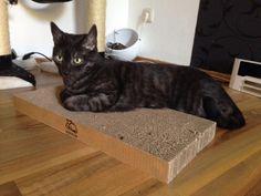 Produkttests mit Gewinnbiene: Papcat - Pappe Kollektion für Katzen:  Produkttest über Produkte aus Pappe für Katzen, meine waren begeistert. Einfach auf das Bild klicken.