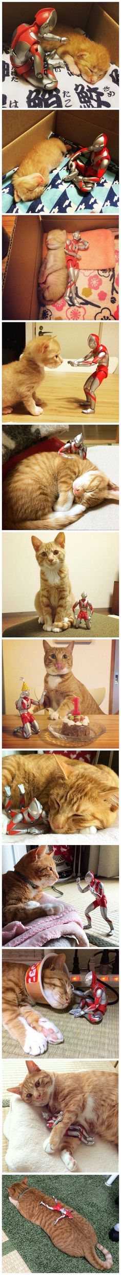 The favorite toy of this cat is with him since he was a baby - Hunde Bilder - Gatos Cute Funny Animals, Funny Cute, Cute Cats, Hilarious, Animal Captions, Animal Memes, Animal Funnies, I Love Cats, Crazy Cats