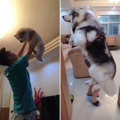 Pupper then, doggo now - Imgur