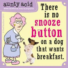 Roosters, you have met your match...   (Don't forget to check out your daily FREE, brand NEW Aunty Acid GOCOMIC today, http://www.gocomics.com/aunty-acid/2013/06/09)