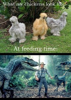 Dump A Day Funny Pictures - 37 Pics