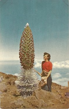 Woman with giant cactus