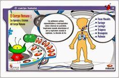 """""""El cuerpo humano"""", de la Junta de Castilla y León, es un juego que trata del conocimiento del cuerpo humano a distintos niveles: partes del cuerpo, sentidos y sus órganos, sistemas y aparatos. Por ello puede utilizarse en sus distintas partes desde 1º a 4º de Educación Primaria. Body Systems, Online Gratis, Moma, Human Body, Spanish, Science, School, Google, Human Body Muscles"""