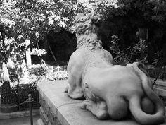 石像  http://ift.tt/2gxPCjl #Olympus #omd #em10 #photooftheday #ファインダー越しの私の世界 #写真好きな人と繋がりたい #カメラ好きな人と繋がりたい