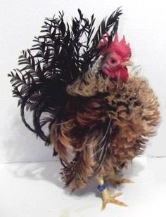 Dad of eggs, frizzle, serama, thread? Bantam Chickens, Chickens And Roosters, Pet Chickens, Raising Chickens, Pretty Birds, Beautiful Birds, Animals Beautiful, Fancy Chickens, Chickens Backyard