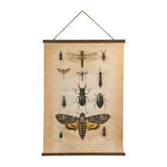 Vintage poster - insecten - 50x70 cm | Xenos