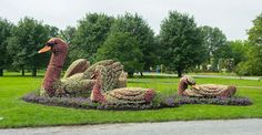 Swan Plant Sculptures at the Montreal Botanical Garden Montreal Botanical Garden, Botanical Gardens, Amazing Gardens, Beautiful Gardens, Topiary Garden, Grass Flower, Plant Illustration, Live Plants, Garden Styles