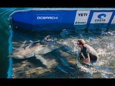 Expedition Nantucket: YETI the Shark